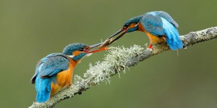 National Geographic показал лучшие снимки живой природы за этот год