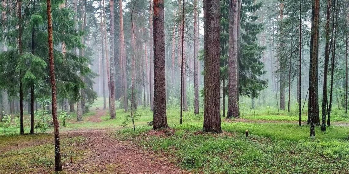 """""""Единая Россия"""" законодательно обеспечила создание единой системы учета леса"""