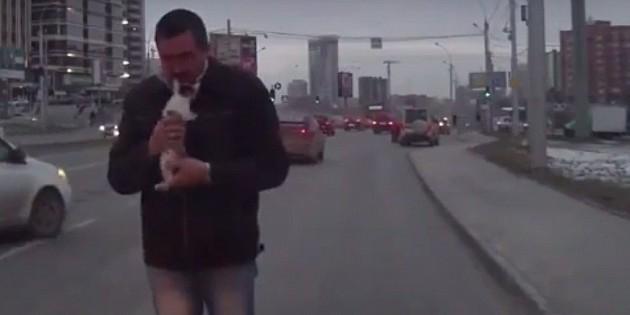 Новосибирец, спасший котенка из-под колес машин, стал героем сети