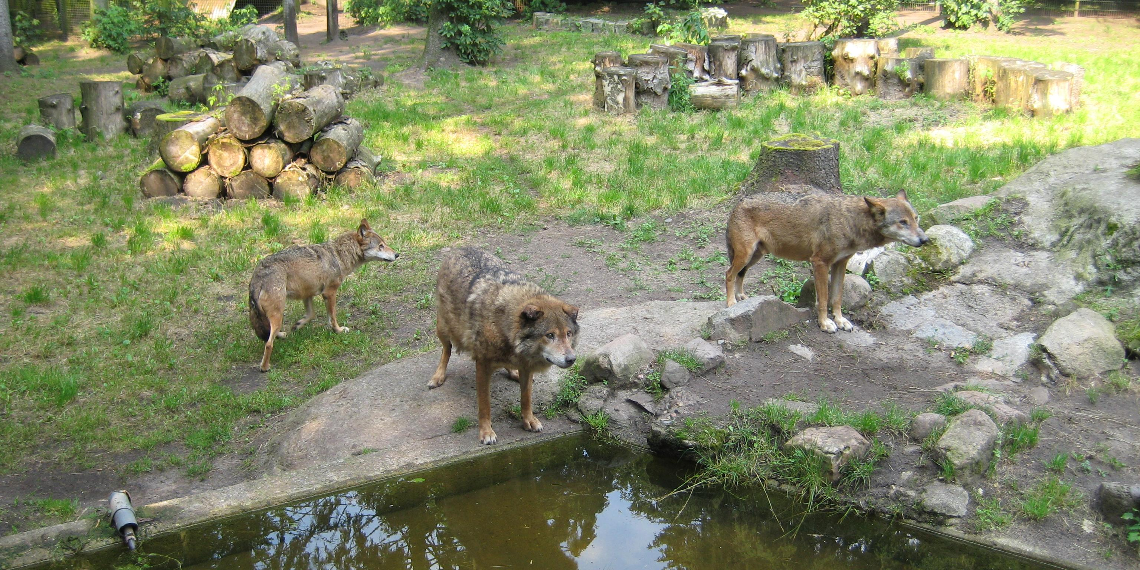 В немецком зоопарке из-за кризиса будут скармливать одних животных другим