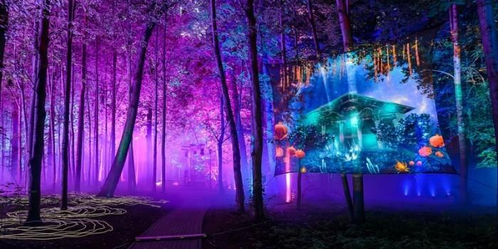 """Фото дня: парк """"Останкино"""" превратили в """"Волшебный лес"""""""