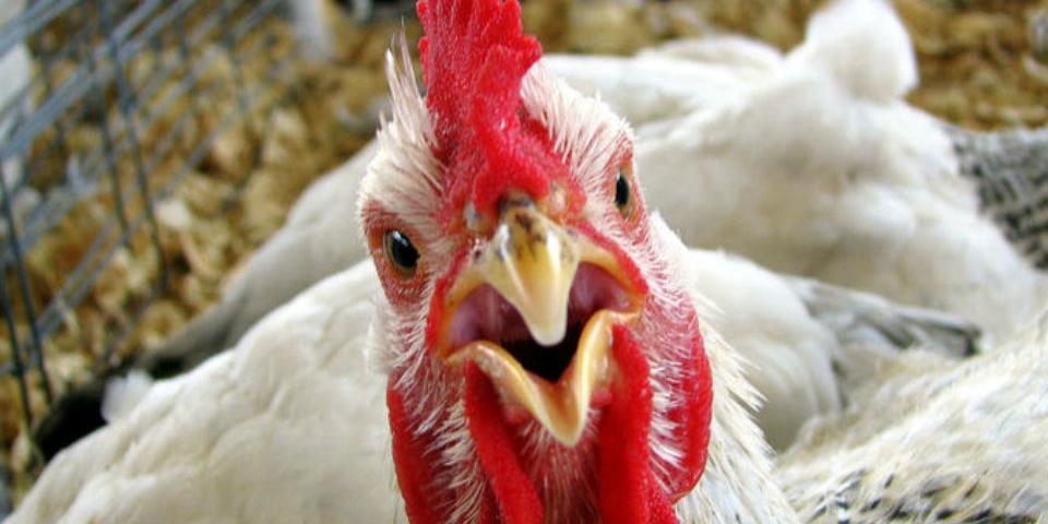 Казахстан запретил ввозить в страну продукцию 36 птицефабрик из России
