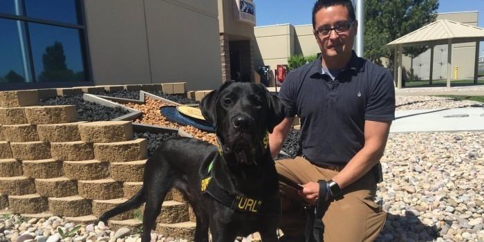В США полицейского пса натренировали на поиск порнографии