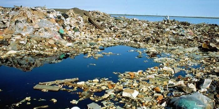 К 2050 году в мировом океане будет больше пластика, чем рыбы