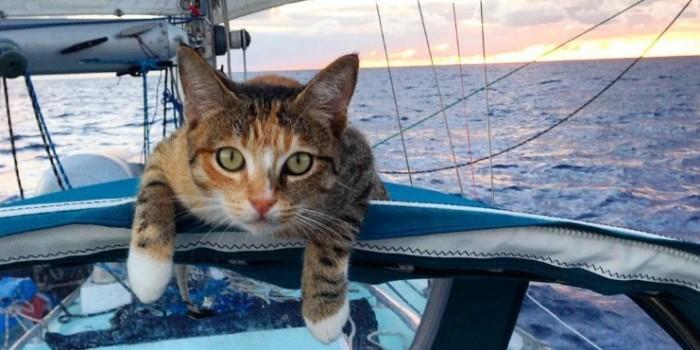 Инстаграм американки, путешествующей со своей кошкой, покорил сеть