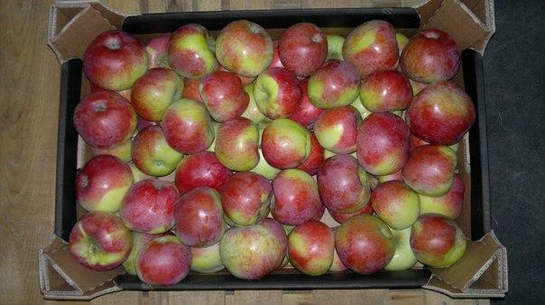 Россельхознадзор вернул Латвии 39 тонн фруктов