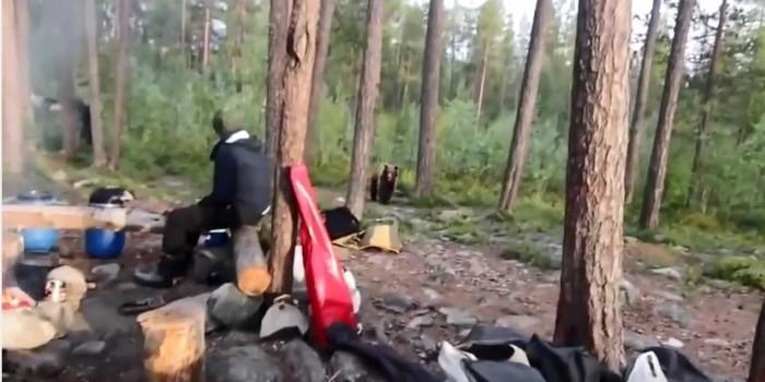 В Заполярье туристы прогнали медведя, исполнив хором «Песню про зайцев» (ВИДЕО)