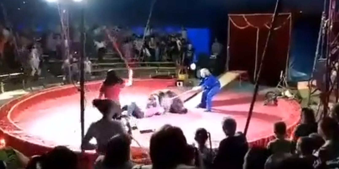 Зрители сняли нападение медведя на дрессировщика во время циркового выступления