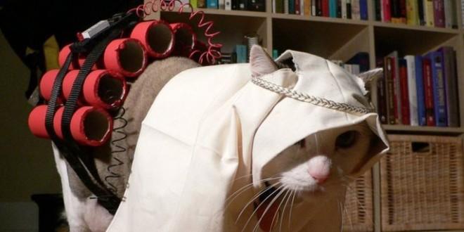 Полиция Москвы разыскивает заминированного кота-смертника