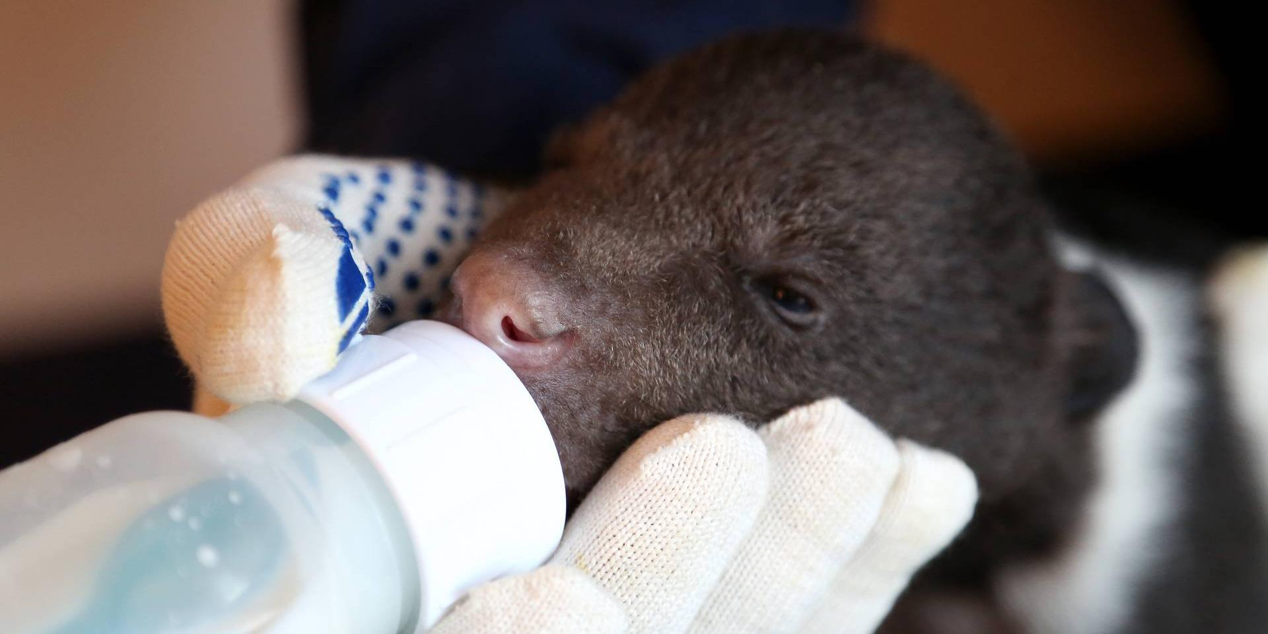 Династия биологов больше 20 лет спасает осиротевших медвежат в тверском интернате
