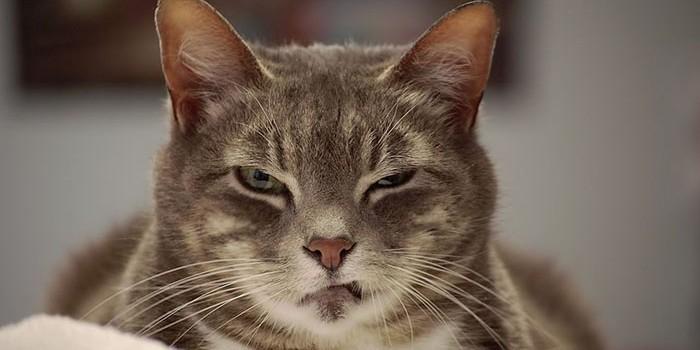 Нетрезвый житель Чукотки разгромил чужую квартиру, бегая за котом