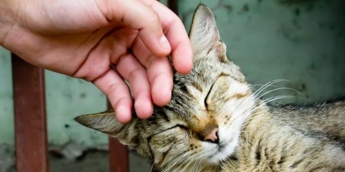 Российские ученые доказали пользу кошачьего мурчания для здоровья человека