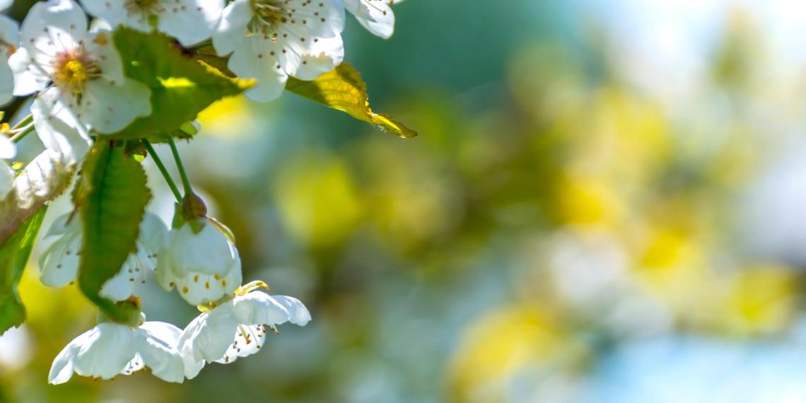 Российские метеорологи дали прогноз на весну и лето