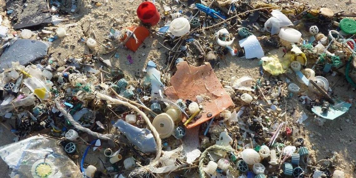 Ученые из Якутии обнаружили жуков, питающихся пластиком