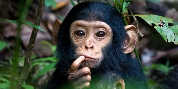 Ученые обнаружили обезьян, создавших собственную религию