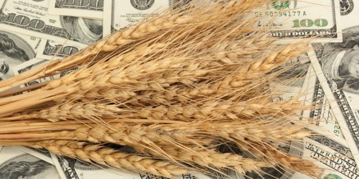 Bloomberg рассказал, как США уступили России позиции по экспорту пшеницы