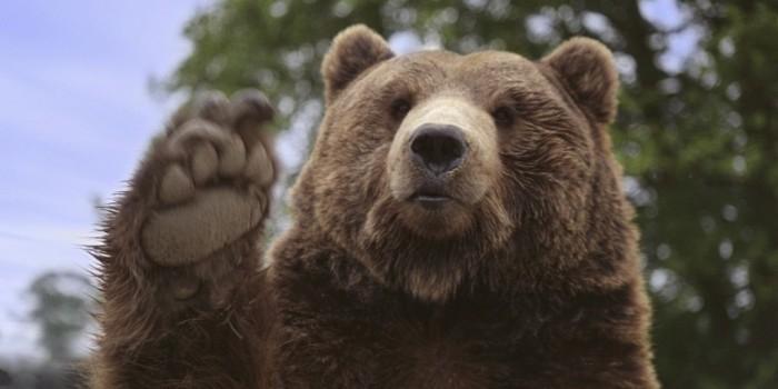 Иркутчанин угостил трех медведей в кафе сгущенкой и остался без руки