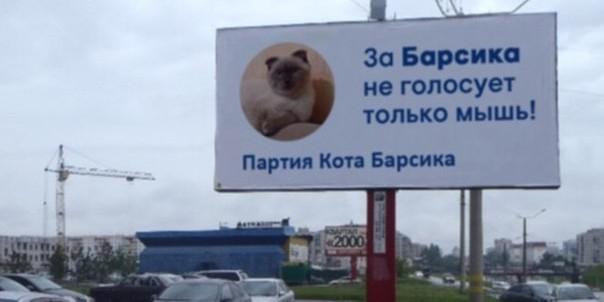 Барнаульский кот Барсик намерен баллотироваться на пост президента