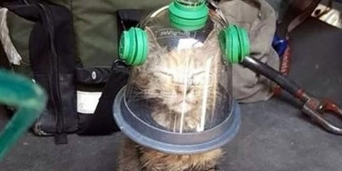 В США пожарные спасли котенка при помощи специальной кислородной маски
