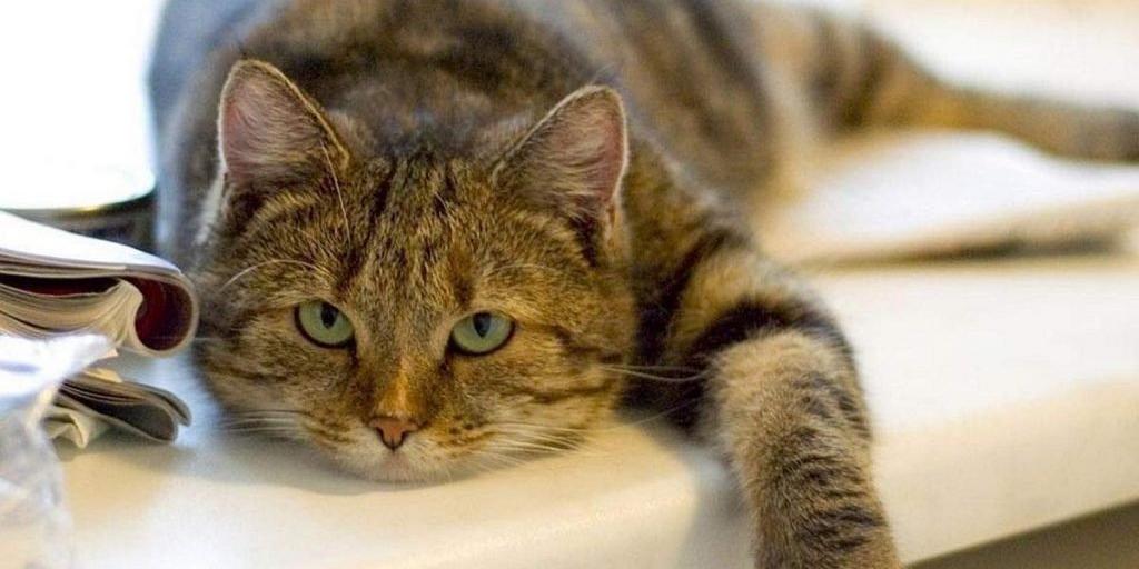 """Ученые обвинили кошек в нежелании работать за еду и склонности к """"халяве"""""""