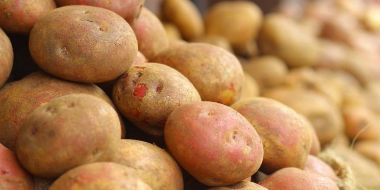 Белоруссия впервые начала импортировать картофель