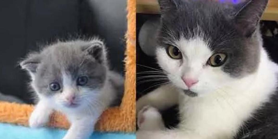 Китайские ученые начнут продавать клонированных котят