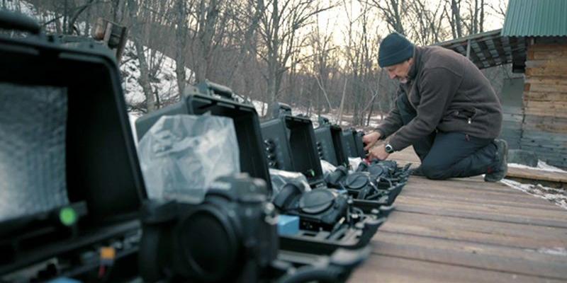 Россиянин выиграл конкурс Wildlife Photographer с уникальным фото амурской тигрицы