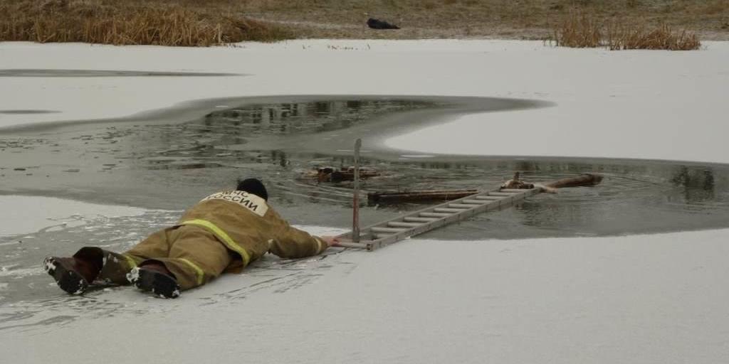 Белгородские спасатели вытащили провалившуюся под лед собаку