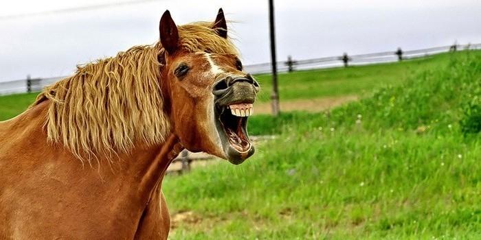 Обезумевший конь бьет окна в Томской области