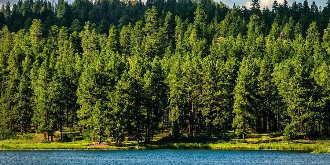 Российские леса могут спасти мир от климатических изменений