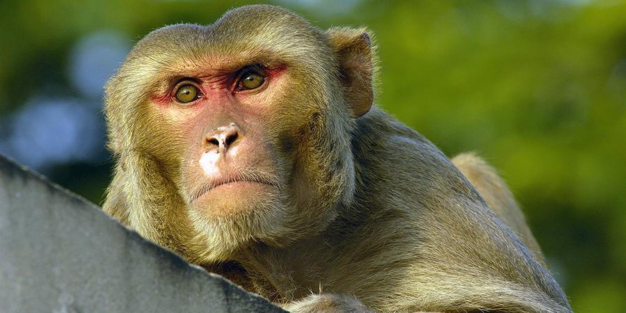 Швейцарский суд разрешил закрепить в конституции кантона права приматов