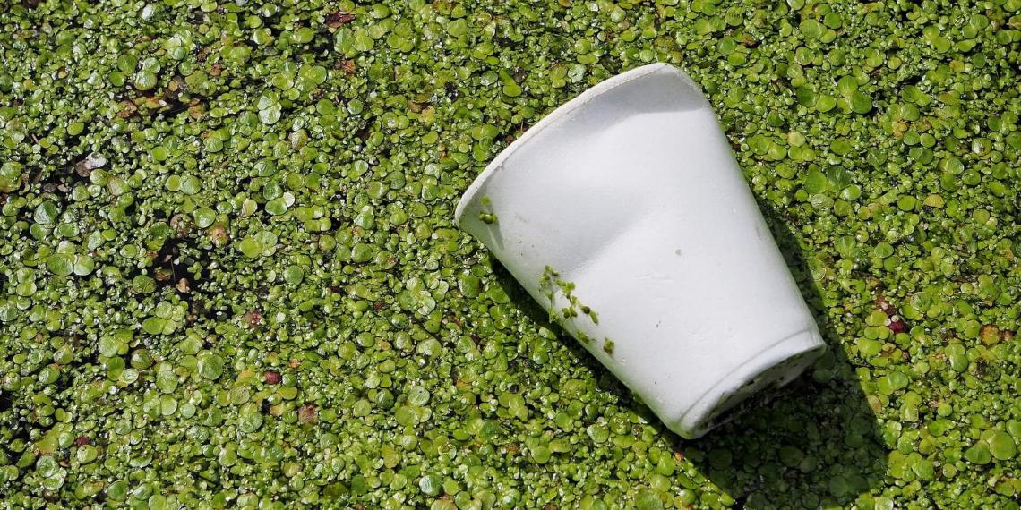 Отечественные ученые создали новый вид биоразлагаемого пластика