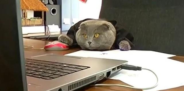 В Румынии кот работает менеджером по рекламе (ВИДЕО)
