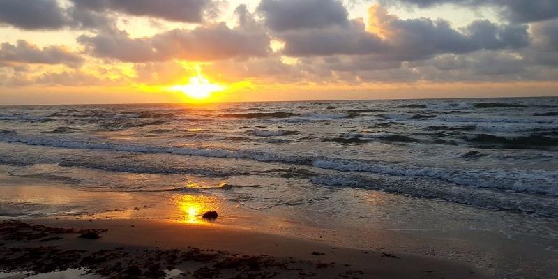 Опасные голубые драконы выплыли на берег в Техасе