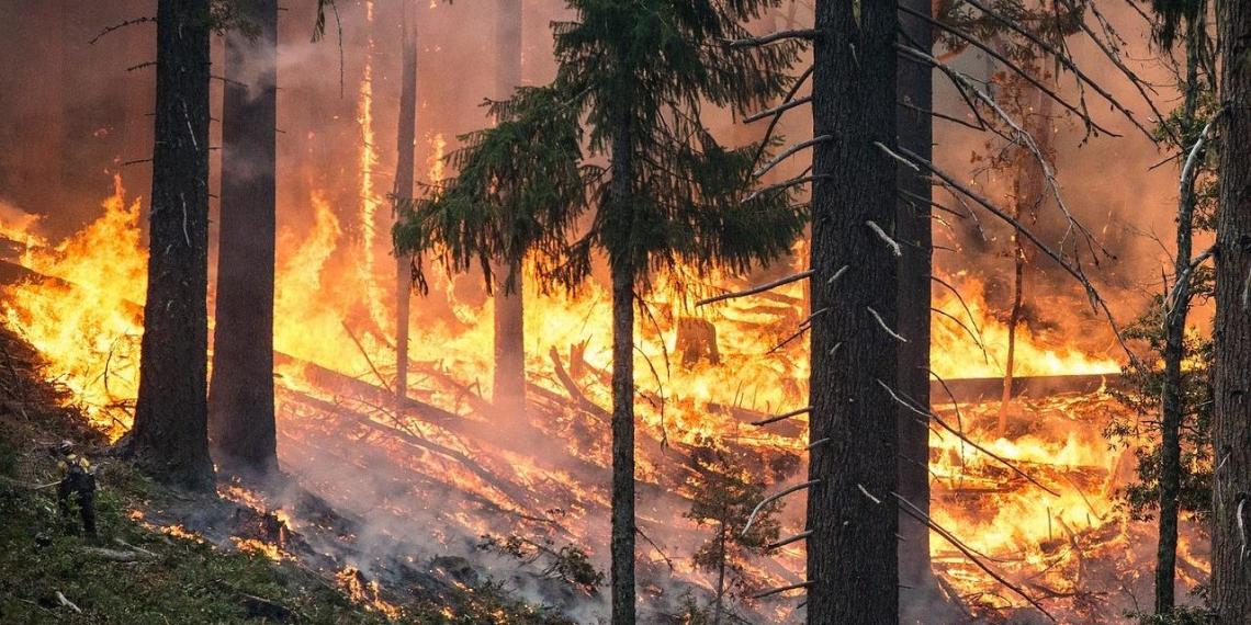 Медведев потребовал от губернаторов заняться тушением лесных пожаров