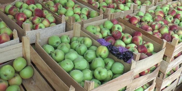 В 2015 году Белоруссия поставила в Россию в 5 раз больше яблок, чем вырастила
