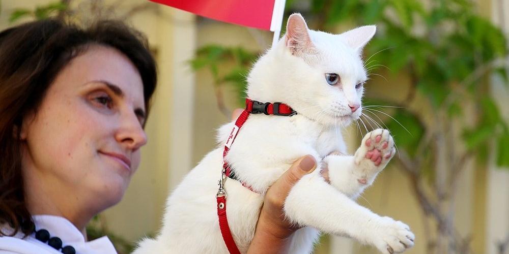 Предсказатель Ахилл наградил лучших служебных кошек России. Ими стали Муся, Шпатель и Матрос