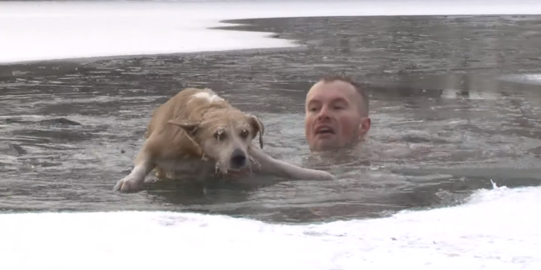 В Белгородской области журналист снимал сюжет про уток и спас тонувшую собаку