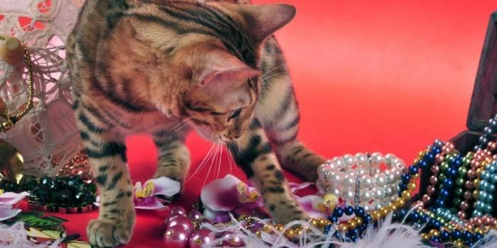 В Шереметьево сбежавший от хозяйки кот разгромил бутик