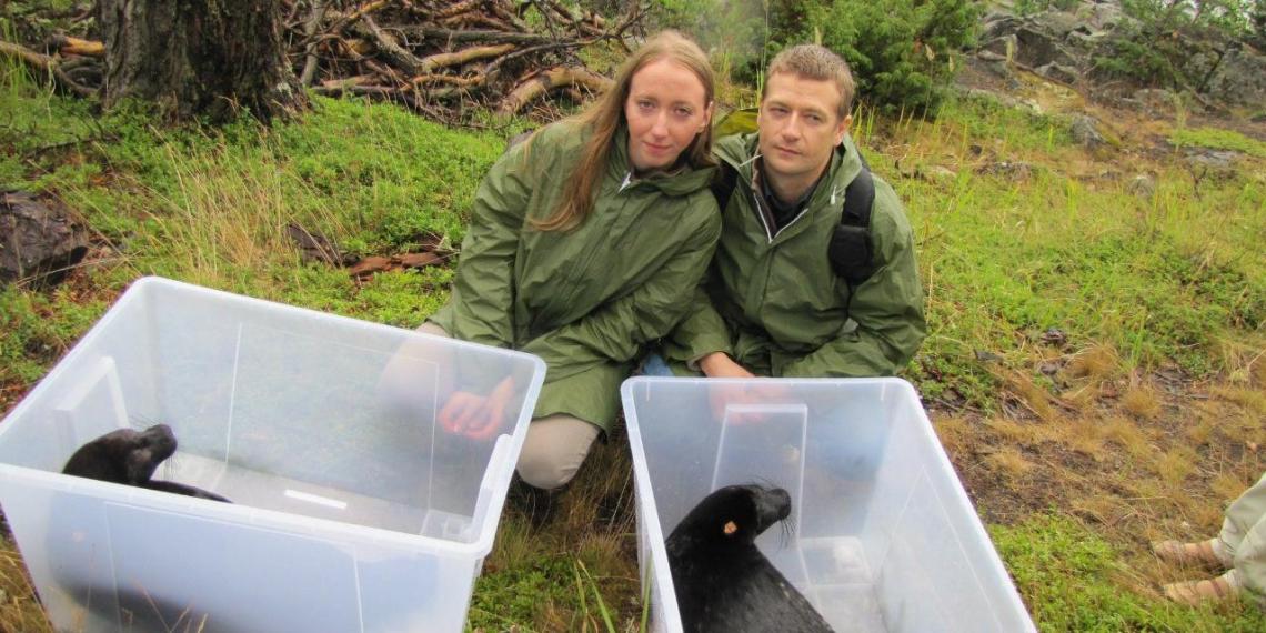 Семья биологов из Санкт-Петербурга открыла первый в России центр помощи ластоногим