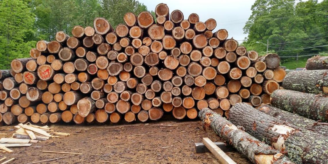 Россия столкнулась с дефицитом древесины