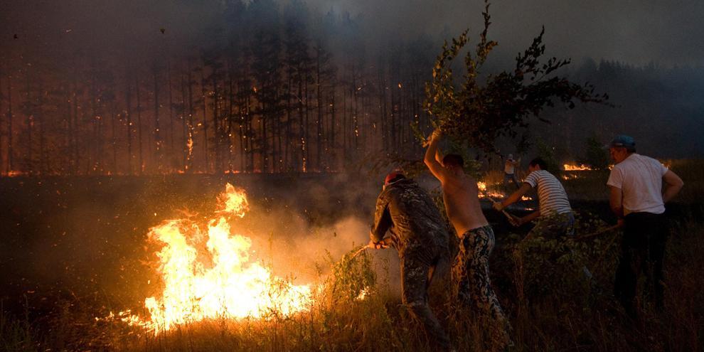 Площадь лесных пожаров в России достигла размеров Крыма