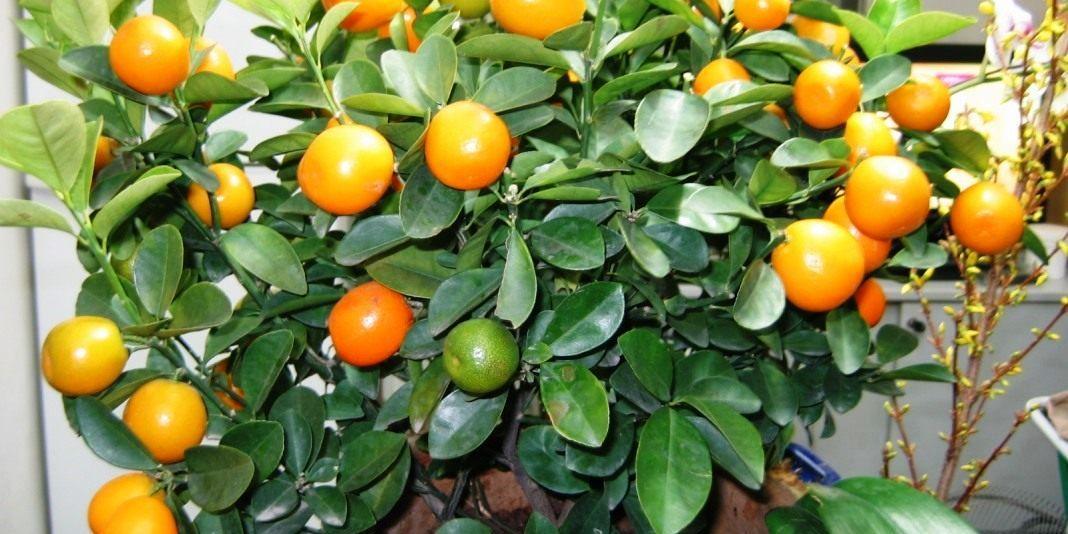"""""""Молодежка ОНФ"""" вручила своим подшефным апельсиновые деревья"""