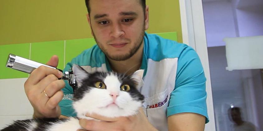 Зоозащитница пожаловалась в прокуратуру на ветеринара, спасающего животных от смерти