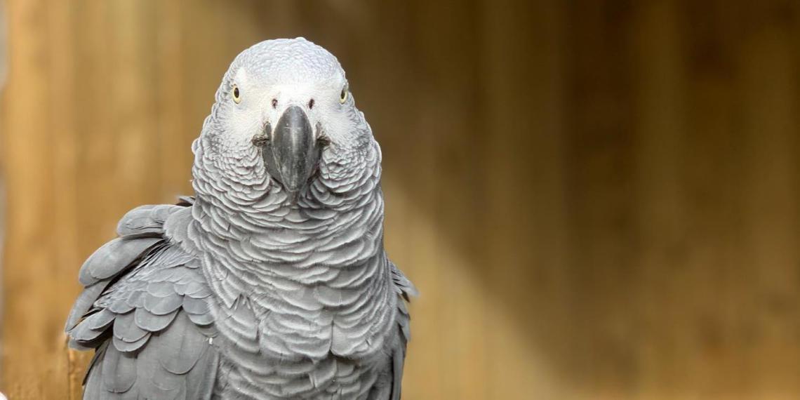 В Британии зоопарк спрятал попугаев, которые смеялись над посетителями и матерились