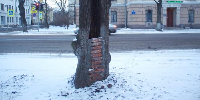 В Петербурге починили треснувшее дерево с помощью кирпича