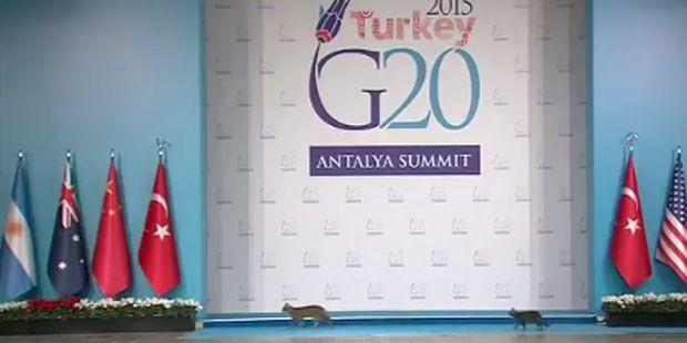 Три кошки стали звездами саммита «Большой двадцатки»