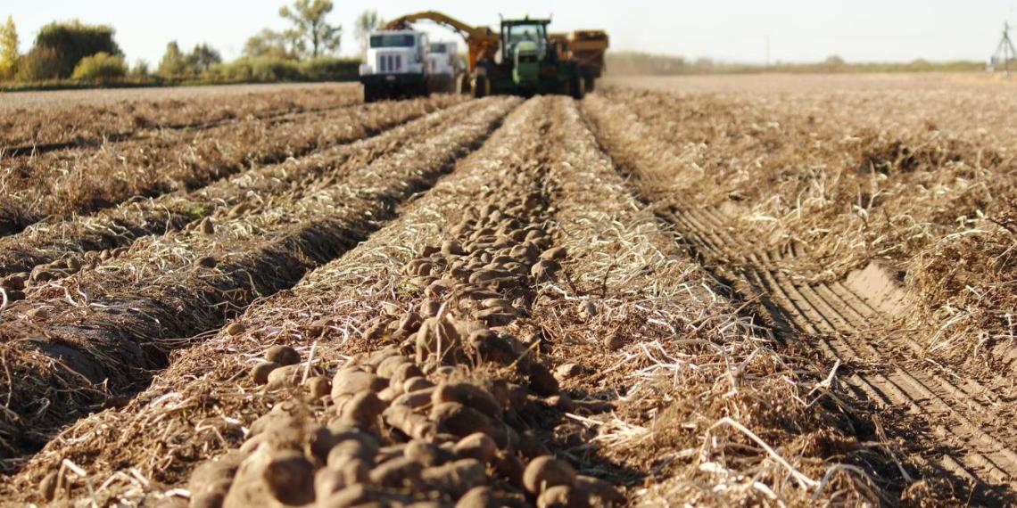 Минсельхоз хочет привлечь осужденных к полевым работам