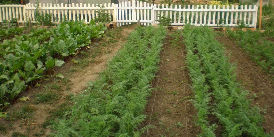 На Сахалине начали удобрять огороды икрой