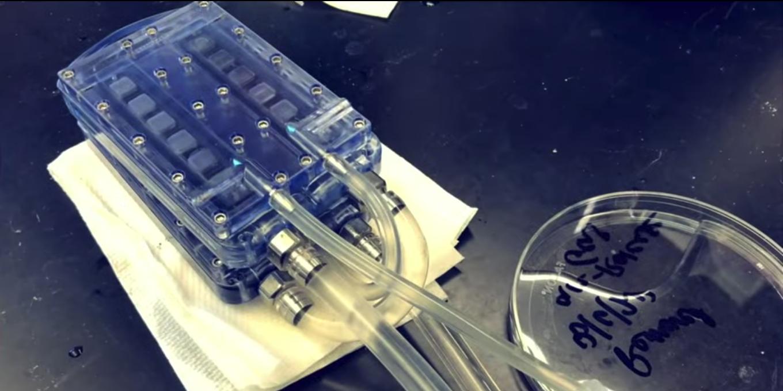 Ученые из США создали автономную искусственную почку